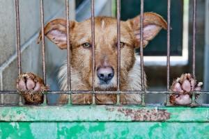 caged-278910_1920