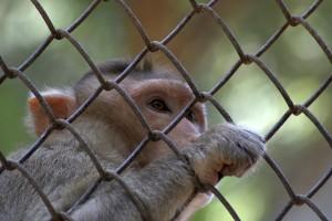 monkey-166942_1920
