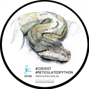 Python decal